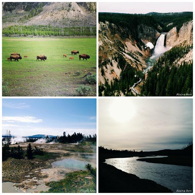 Yellowstone National Park iPhone Favorites | Alaina Ann Photography