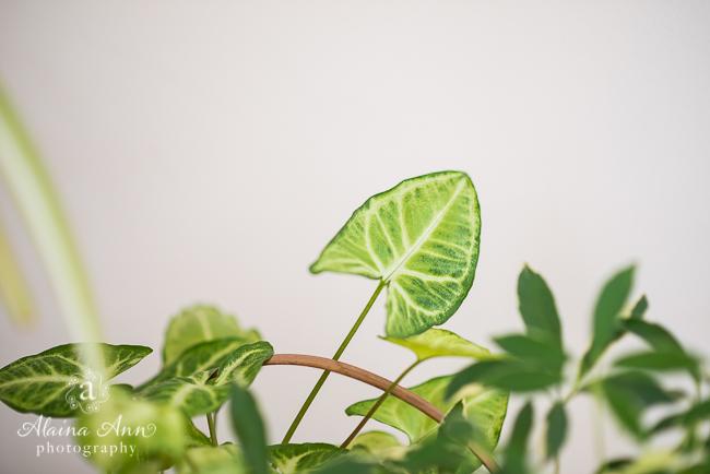 Green Inside | Friday Favorite | Alaina Ann Photography