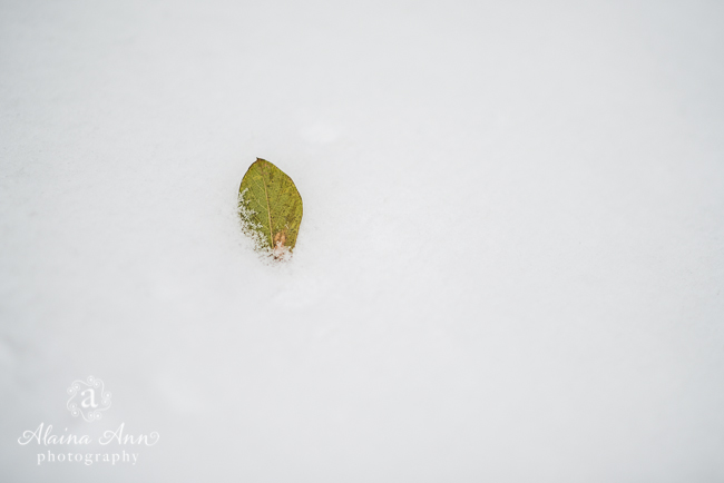 Leaf in the Snow | Friday Favorite | Alaina Ann Photography