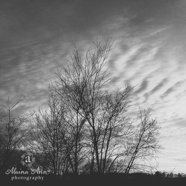 Winter Trees | Alaina Ann Photography