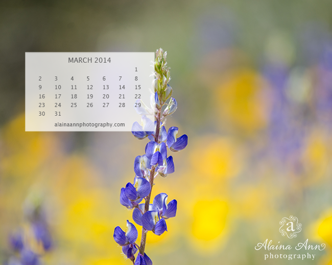 March 2014 Wallpaper Calendar | Alaina Ann Photography
