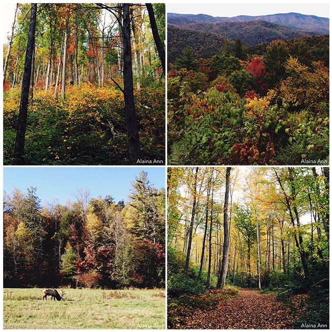 Great Smoky Mountains National Park   iPhone Favorites   Alaina Ann Photography