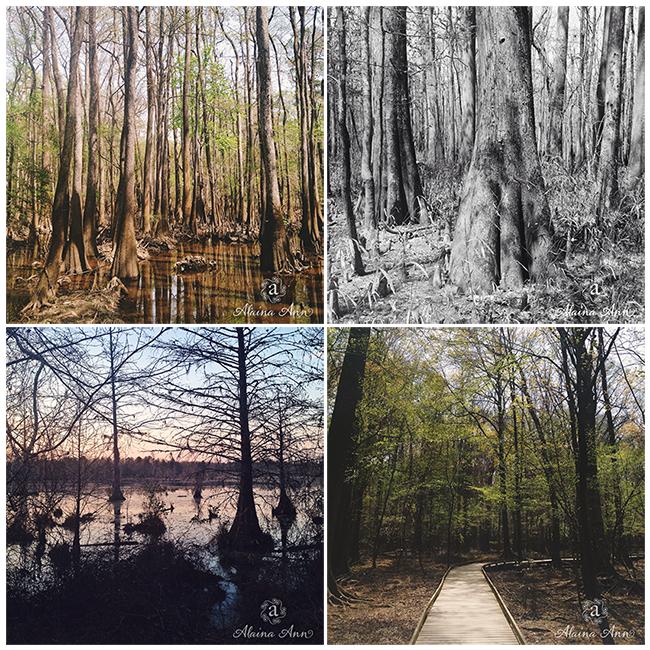 Congaree National Park | iPhone Favorites | Alaina Ann Photography