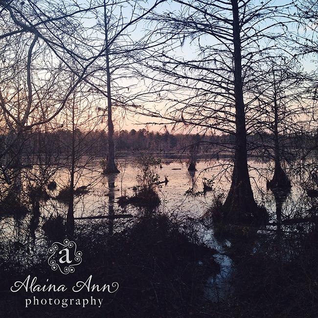 Congaree Sunset | Friday Favorite | Alaina Ann Photography