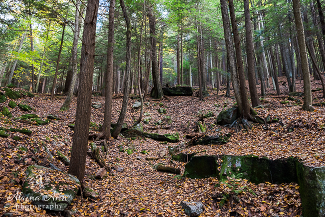 Childhood Forest | Photograph Story | Alaina Ann Photography