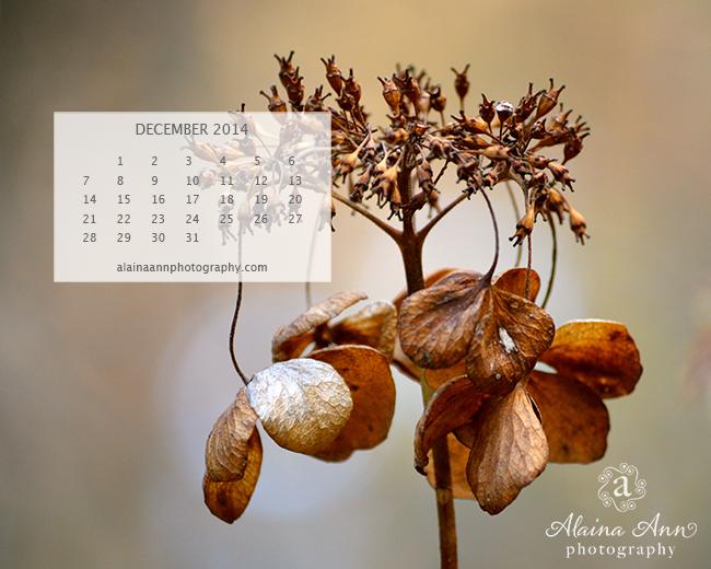 December 2014 Wallpaper Calendar   Alaina Ann Photography