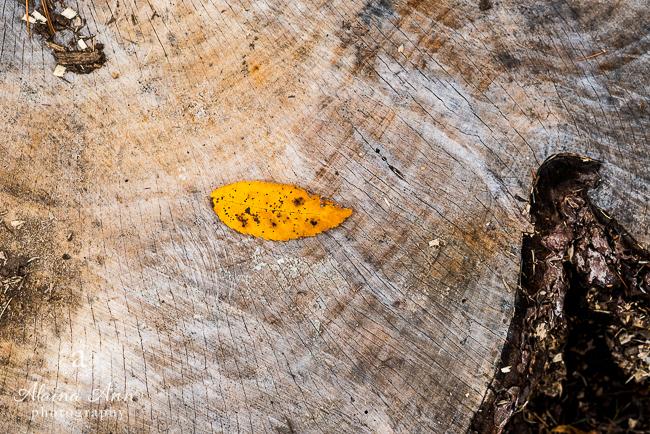 Fall Textures | Photograph Story | Alaina Ann Photography