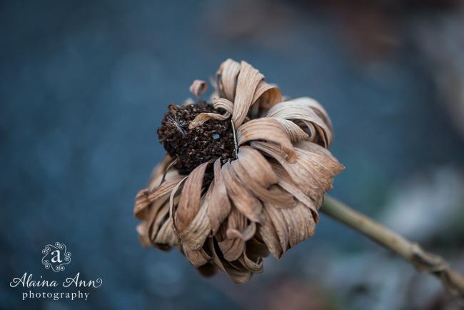 Expiring Flower | Photograph Story | Alaina Ann Photography