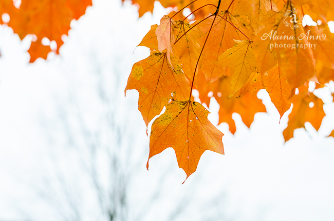 Stages of Fall | Photograph Story | Alaina Ann Photography