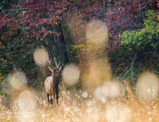 October | 2015 Wildlife Calendar
