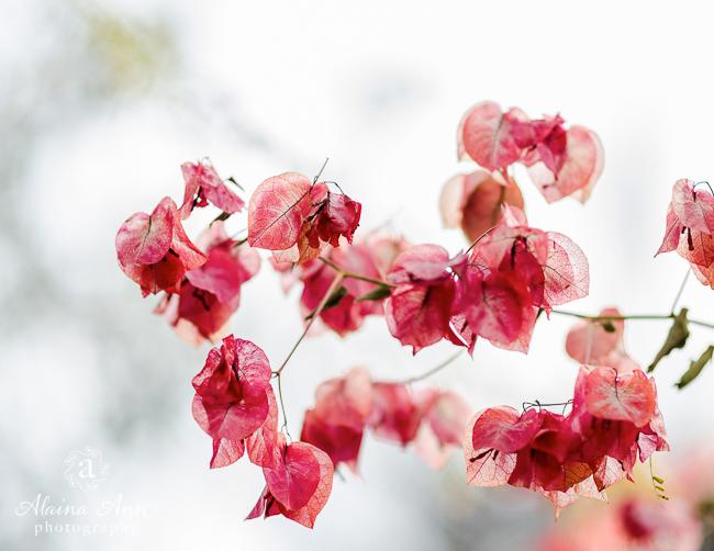 January | 2015 Flowers Calendar