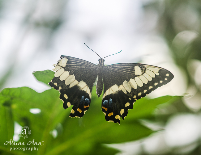 January | 2015 Wildlife Calendar