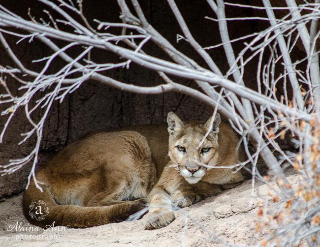 March | 2015 Wildlife Calendar