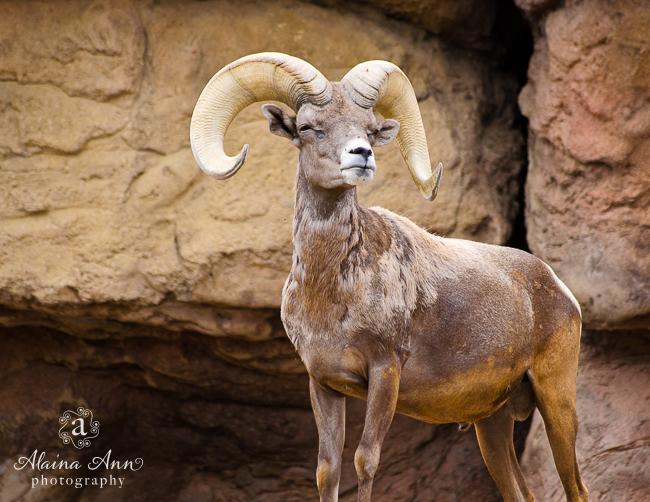 May | 2015 Wildlife Calendar