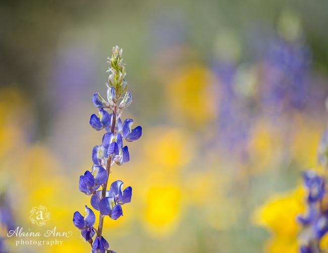 June | 2015 Flowers Calendar