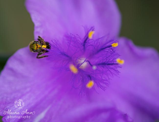 July | 2015 Flowers Calendar