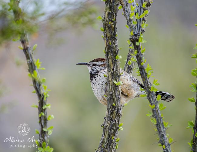 July | 2015 Wildlife Calendar