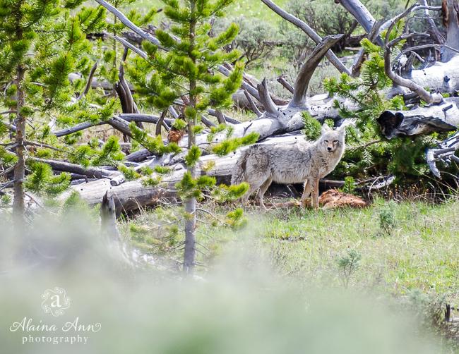 September | 2015 Wildlife Calendar
