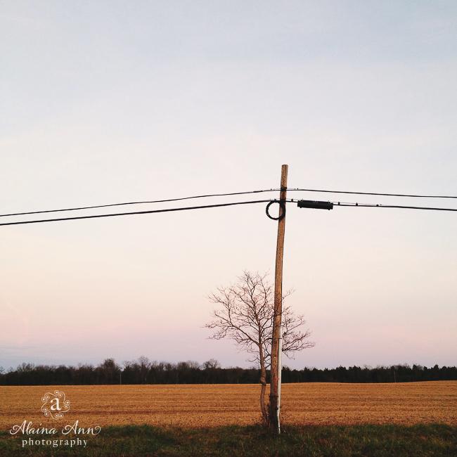 Pole Tree | Photograph Story | Alaina Ann Photography
