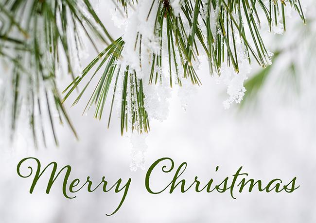 Merry Christmas | Alaina Ann Photography