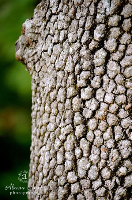 Bark Texture | Photograph Story | Alaina Ann Photography