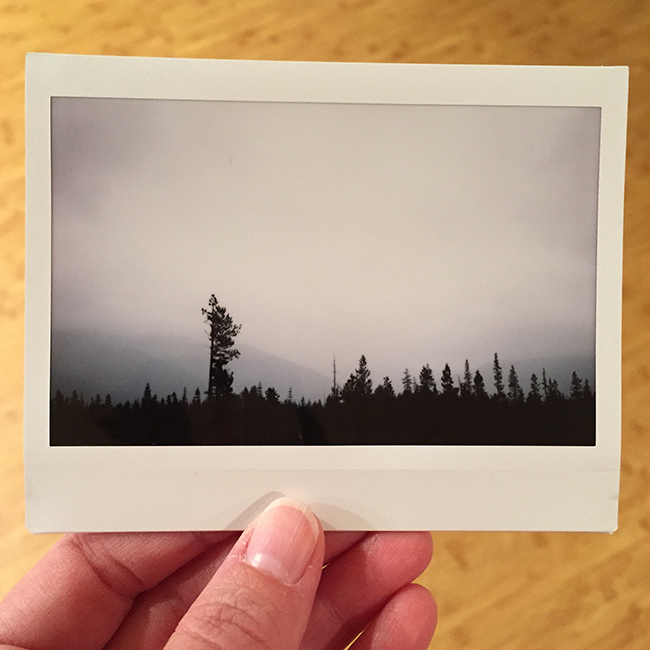 Mount Hood National Forest | Alaina Ann Photography