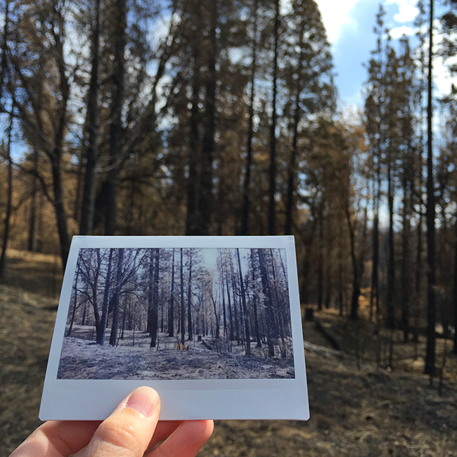 Stanislaus National Forest | Alaina Ann Photography