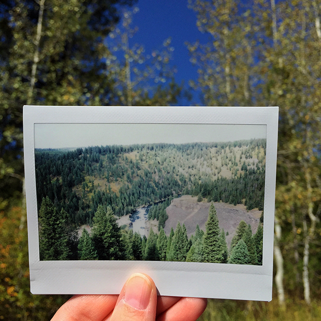 Targhee National Forest | Alaina Ann Photography