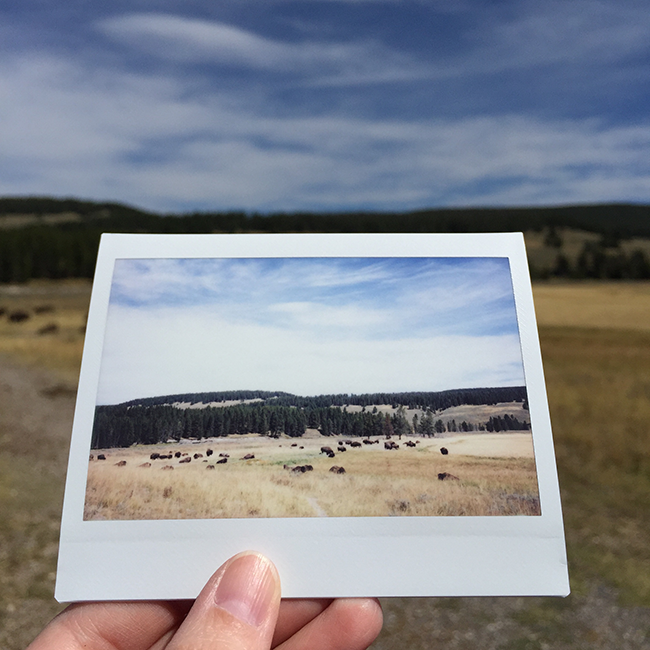 Yellowstone National Park | Alaina Ann Photography