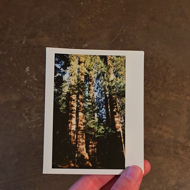 Sequoia National Forest | Alaina Ann Photography
