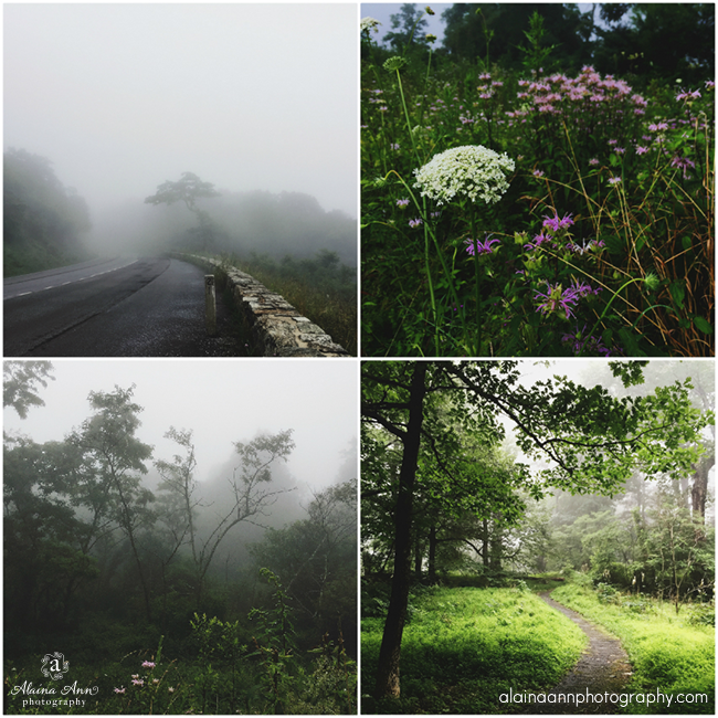 Shenandoah National Park | iPhone Favorites | Alaina Ann Photography