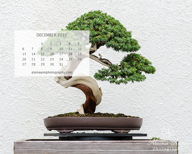 December 2015 Wallpaper Calendar | Alaina Ann Photography