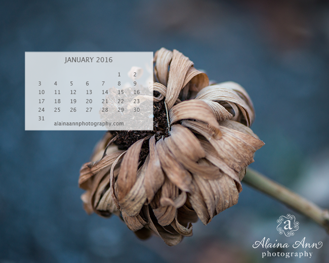 January 2016 Wallpaper Calendar | Alaina Ann Photography