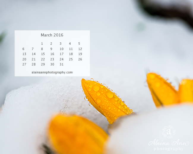 March 2016 Wallpaper Calendar | Alaina Ann Photography