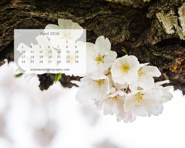 April 2016 Wallpaper Calendar | Alaina Ann Photography