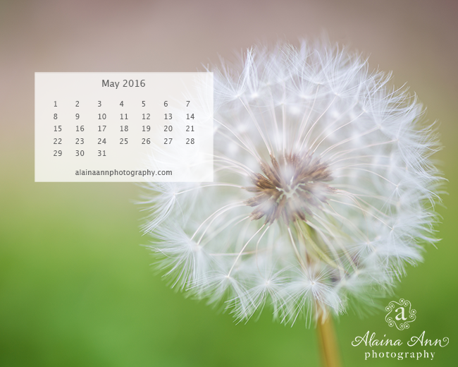 May 2016 Wallpaper Calendar | Alaina Ann Photography