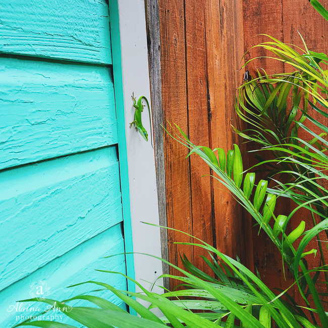 Colorful Lizard Sighting | Friday Favorite | Alaina Ann Photography