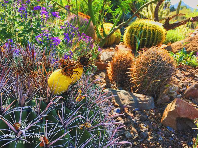 Morning Desert Light | Friday Favorite | Alaina Ann Photography