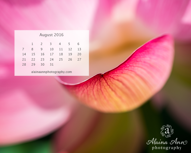 August 2016 Wallpaper Calendar | Alaina Ann Photography