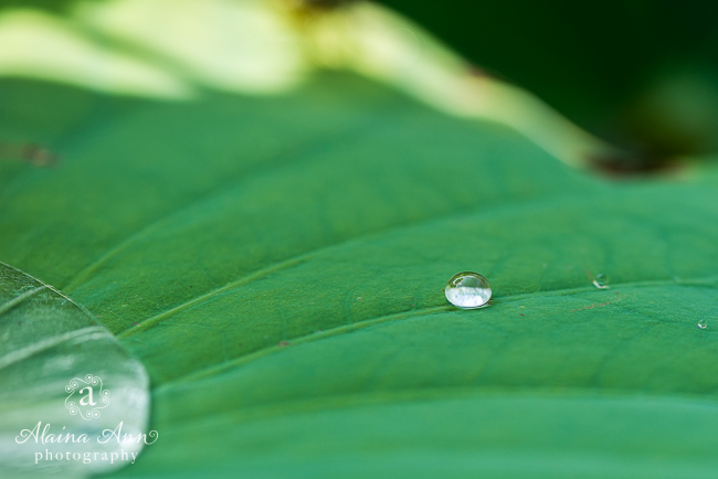 Raindrop | Week 38 (Project 52) | Alaina Ann Photography
