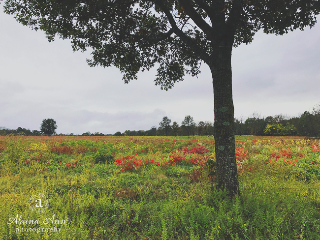Fall on the Ground | Friday Favorite | Alaina Ann Photography