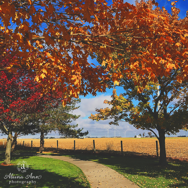 Windy Ohio Afternoon | Friday Favorite | Alaina Ann Photography