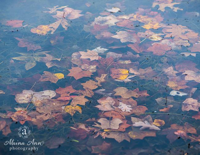 October | Seneca Creek State Park, Maryland