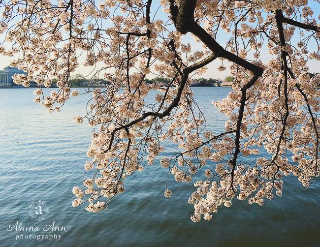 April | Washington, D.C.