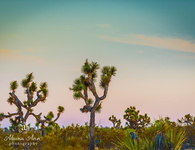 June | Joshua Tree National Park
