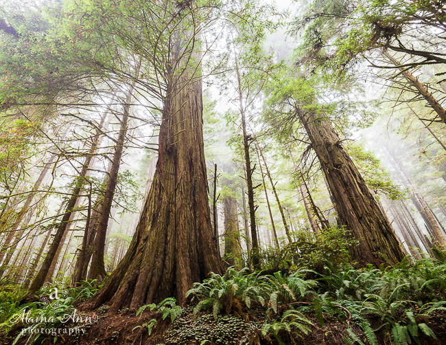 August | Redwood National Park