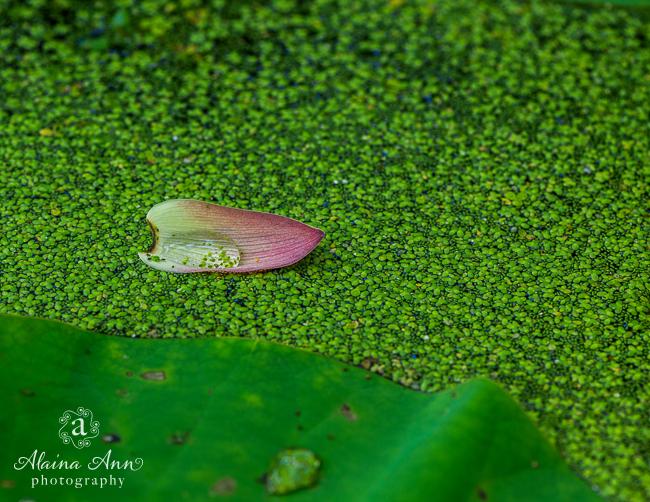 August | Kenilworth Park & Aquatic Gardens