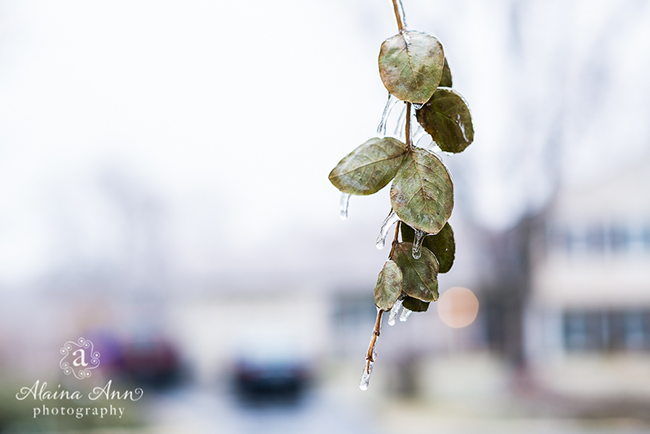 Frozen | Week 50 (Project 52) | Alaina Ann Photography
