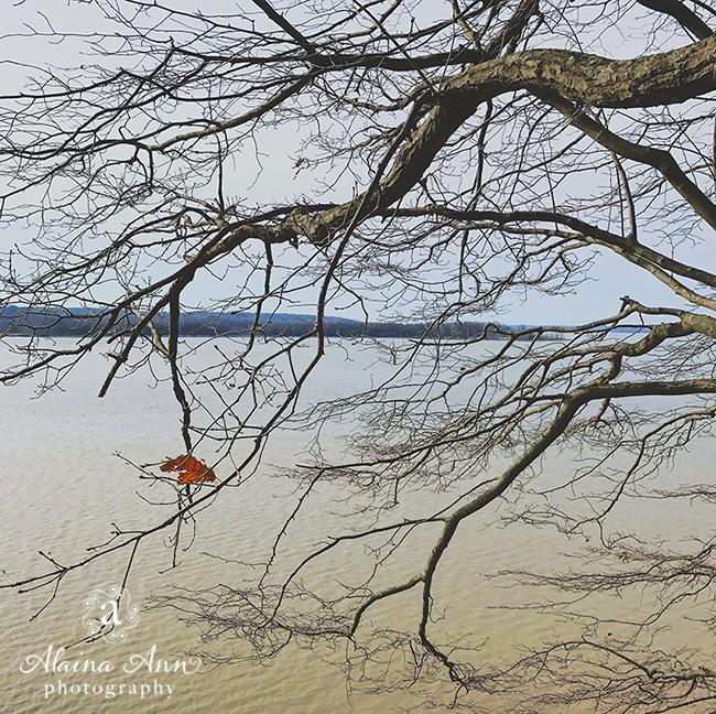Last Leaf | Friday Favorite | Alaina Ann Photography