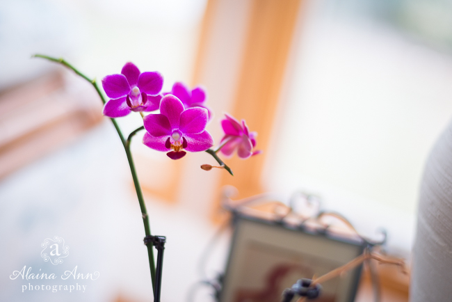 Winter Orchid   Friday Favorite   Alaina Ann Photography